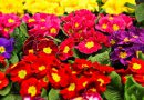 Targi ogrodnictwa Gardenia 2019 już za tydzień w Poznaniu