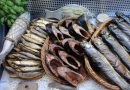 Od jutra największe w Polsce północnej targi spożywcze